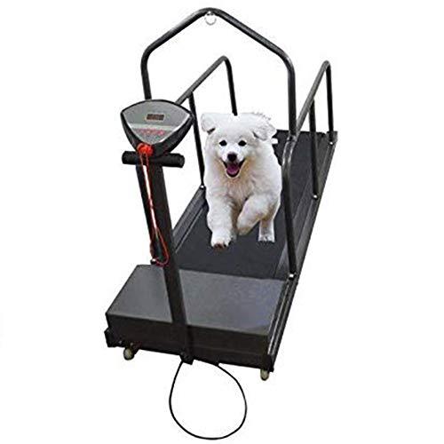 Cinta de correr para perros Equipo de ejercicio para mascotas para correr canino Cinta de correr...