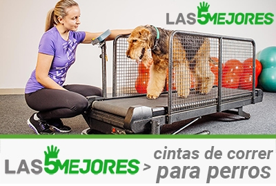 cinta de correr para perros